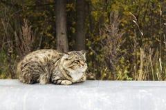 Um gato solitário que senta-se na tubulação de calor Imagens de Stock