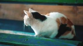 Um gato tricolor disperso velho senta-se em um banco o problema do estilo de vida disperso dos animais Pet o gato video estoque
