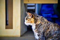 Um gato velho do olho com três coloriu o revestimento que toma a um banho- do sol nos Fotos de Stock Royalty Free