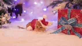Um gato vermelho vestido como Santa Claus está sentando-se perto dos presentes filme