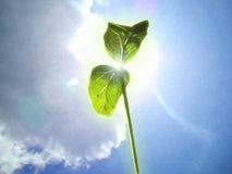 Um germe novo da planta verde estende ao sol da mola imagens de stock royalty free