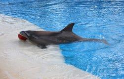 Um golfinho Fotografia de Stock
