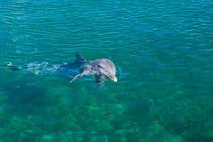 Um golfinho que joga na água. Imagem de Stock Royalty Free