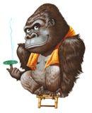 Um gorila que relaxa após ter tomado o banho Fotos de Stock