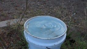Um gotejamento da água potável do cão em uma cubeta nos trópicos video estoque