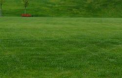Um gramado verde enorme Fotografia de Stock Royalty Free