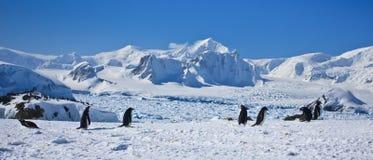 Um grande grupo de pinguins fotos de stock