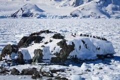 Um grande grupo de pinguins fotografia de stock royalty free