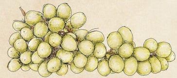 Um grande grupo de uvas Fotografia de Stock
