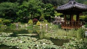 Um grande jardim dos lótus Foto de Stock