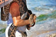 Um grande pitão doméstico nas mãos humanas Fotos de Stock Royalty Free