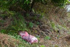 Um grande saco de plástico encheu-se com o desperdício junto com um número de garrafas de vidro que foram despejadas ilegalmente  Fotografia de Stock
