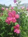 Um grupo bonito de flores Fotografia de Stock