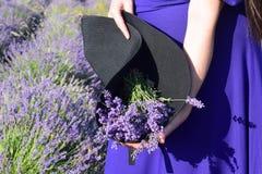 Um grupo da alfazema em um chapéu negro realizado nas mãos de uma menina na perspectiva de um campo da alfazema O conceito da bel fotografia de stock