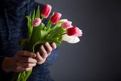 Um grupo da terra arrendada do homem das tulipas foto de stock