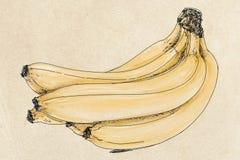 Um grupo das bananas Fotografia de Stock Royalty Free