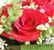 Um grupo das rosas Fotos de Stock Royalty Free