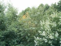 Um grupo de árvores coloridas foto de stock royalty free