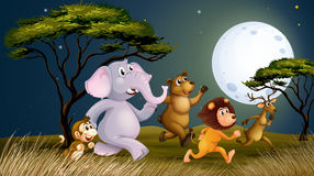 Um grupo de animais na exploração agrícola que andam no meio do nigh Foto de Stock