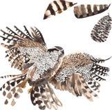 Um grupo de aquarela desenhado à mão que contém o falcão do pássaro Fotografia de Stock Royalty Free