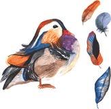 Um grupo de aquarela desenhado à mão que contém o galericulata do Aix do pássaro Fotografia de Stock