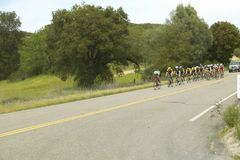 Um grupo de bicyclists da estrada Foto de Stock Royalty Free