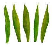 Um grupo de grupo botânico do verão da mola de lâminas da ilustração da aquarela das folhas para o projeto ilustração royalty free