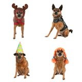 Um grupo de cães fotografia de stock