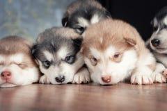 Um grupo de cachorrinhos a descansar imagens de stock
