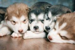 Um grupo de cachorrinhos a descansar tonificado foto de stock