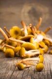 Um grupo de cogumelos comestíveis dos cogumelos selvagens amarelos no close up velho da placa de madeira Fotografia de Stock Royalty Free