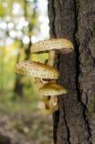 Um grupo de cogumelos em um tronco de árvore fotografia de stock royalty free
