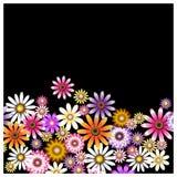Um grupo de cores em um fundo preto Imagens de Stock Royalty Free