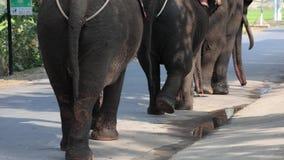 Um grupo de elefantes está na estrada vídeos de arquivo