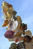 Um grupo de escudos do mar. imagens de stock royalty free