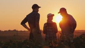 Um grupo de fazendeiros está discutindo no campo, usando uma tabuleta Dois homens e uma mulher Trabalho da equipe no negócio agrá imagens de stock