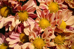 Um grupo de flores bonitas imagem de stock