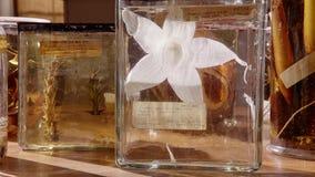 Um grupo de flores fossilizadas nas garrafas de vidro fotografia de stock