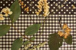 Um grupo de flores pressionadas do campo Imagens de Stock