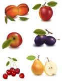 Um grupo de fruta. ilustração royalty free