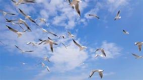 Um grupo de gaivotas voa contra o vento, céu no fundo video estoque
