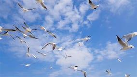 Um grupo de gaivotas voa contra o vento, céu no fundo filme