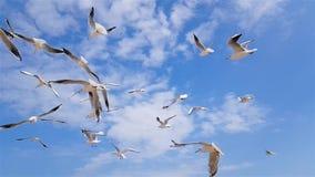 Um grupo de gaivotas voa contra o vento, céu no fundo vídeos de arquivo