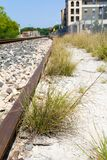 Um grupo de grama por uma trilha não utilizada ao lado de uma cerca Fotografia de Stock Royalty Free
