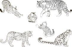 Um grupo de grande gato predatório ilustração do vetor