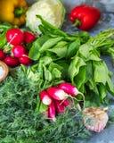 Um grupo de legumes frescos do rústico, do oediska, dos grupos dos espinafres, dos pretsets búlgaros e dos galhos do aneto imagens de stock