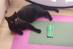 Um grupo de marcadores verdes no fundo verde com gato preto Fotos de Stock Royalty Free