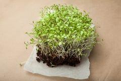 Um grupo de micro verdes da casa fresca das sementes brotadas da salada imagem de stock royalty free