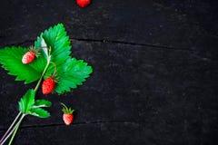 Um grupo de morangos maduras selvagens em um fundo arborizado escuro no fundo natural da floresta Alimento do conceito da dieta imagens de stock