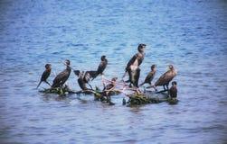 Um grupo de pássaro de mar nos ramos imagem de stock royalty free